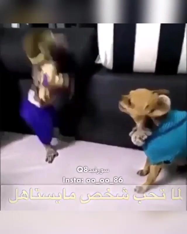 الغزل المفرط ومن الحب ماقتل هههه