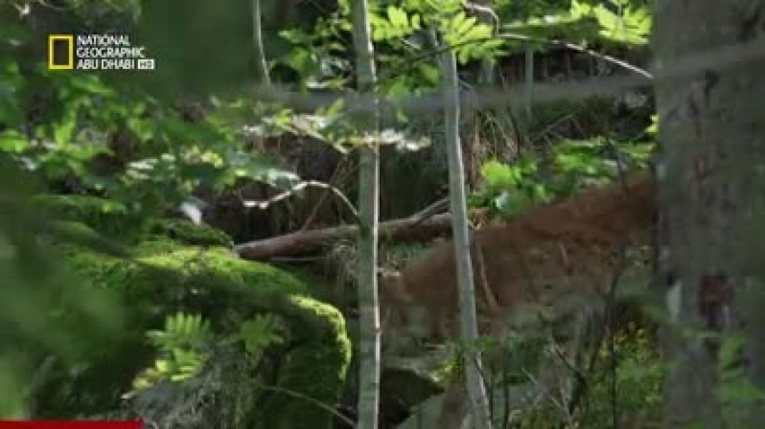 ما علاقة اختفاء بقع الفراء بالتمويه في الشتاء في غابة