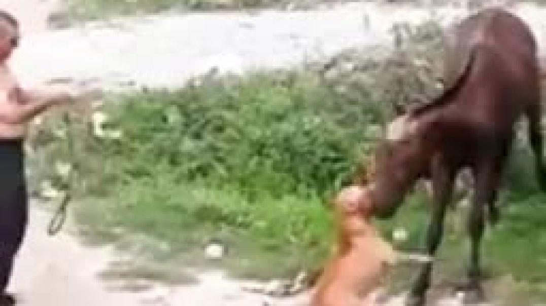 حصان مجنون يقوم بعظ الكلب