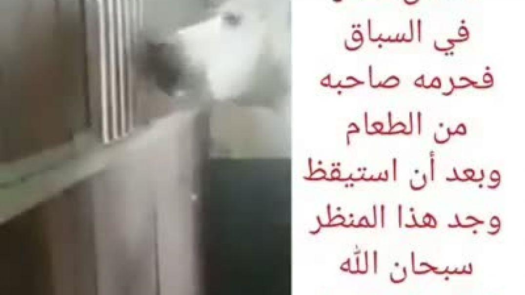 حصان احرمه صاحبه من الطعام_شاهدو ما الذي حصل معه