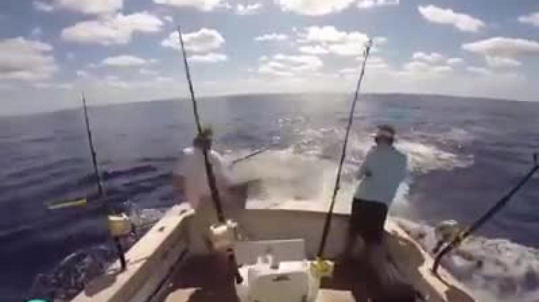 الأسماك يهاجمون الصيادين علا متن القوارب